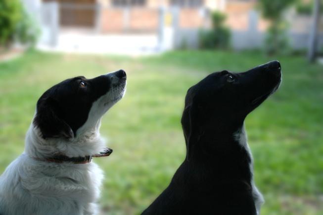 Bien vivre avec mon chien, les bases de l'obéissance