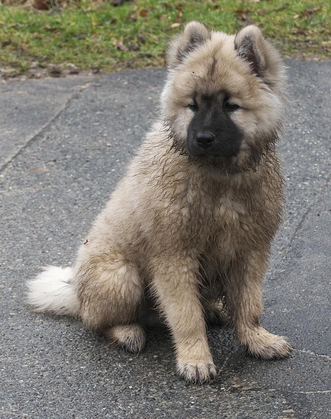 """Le chien """"Malpropre"""""""