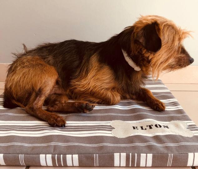 Enfin un coussin Déco pour mon chien !!!!