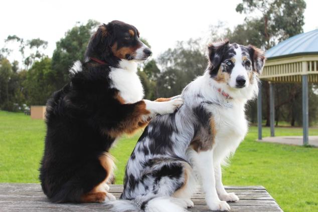 Massage Canin et félin