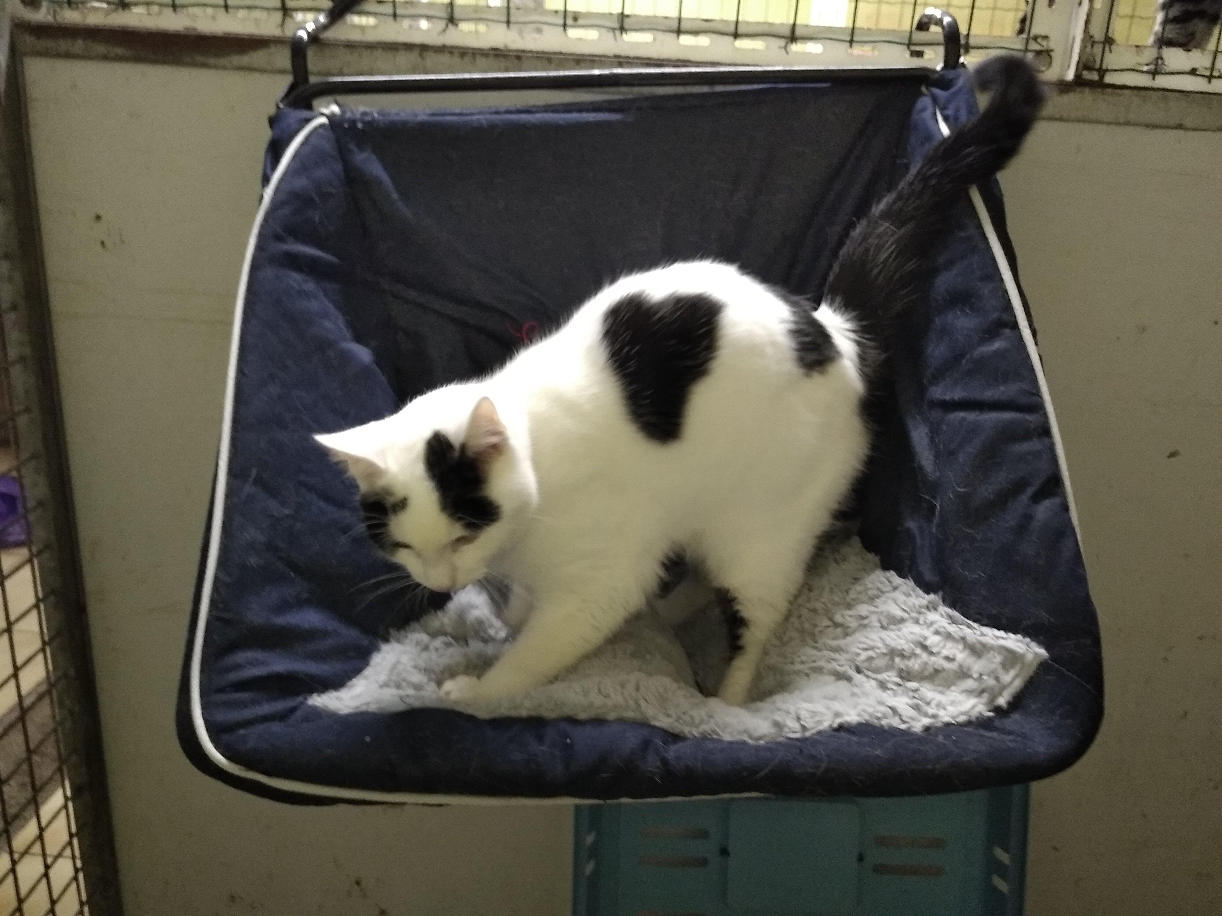Après près d'un mois en pension, la belle Kitty a quitté son hamac pour retrouver sa maîtresse