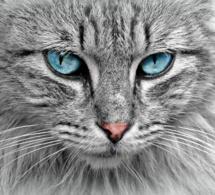 Comprendre son chat ? les besoins fondamentaux de nos félins