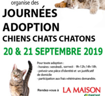 Week end adoption au magasin La Maison Point Vert Flers
